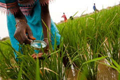 Feature article: Reducing risks from pesticides by empowering rural women